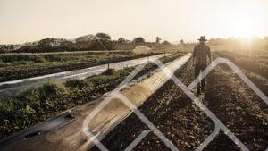 my-farm-web-mobile-application-technology